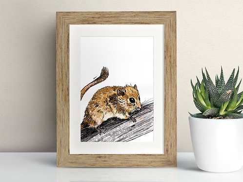 Hazel Dormouse framed art illustration by Rebecca Sawyer at R.Sawyer Designs