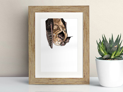 Horseshoe Bat framed art illustration by Rebecca Sawyer at R.Sawyer Designs