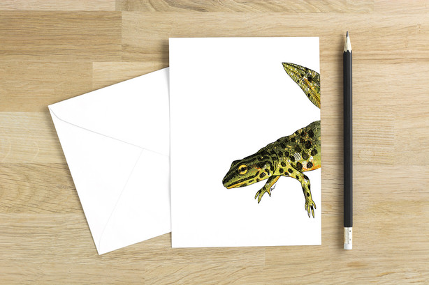 Smooth Newt blank greetings card