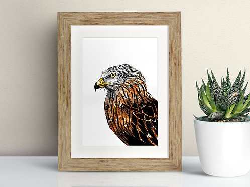 Red Kite framed art illustration by Rebecca Sawyer at R.Sawyer Designs