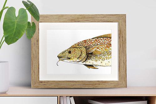 Atlantic Cod framed art illustration by Rebecca Sawyer at R.Sawyer Designs