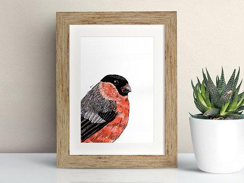 Bullfinch framed art illustration by Rebecca Sawyer at R.Sawyer Designs