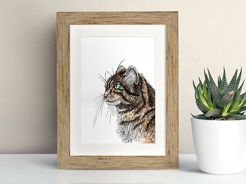Scottish Wildcat framed art illustration by Rebecca Sawyer at R.Sawyer Designs