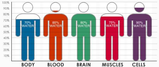 body-water