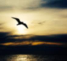 smallbird.png