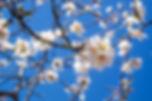 almond-637613_640.jpg