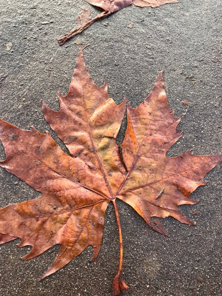 Turning a new leaf in fall prevention