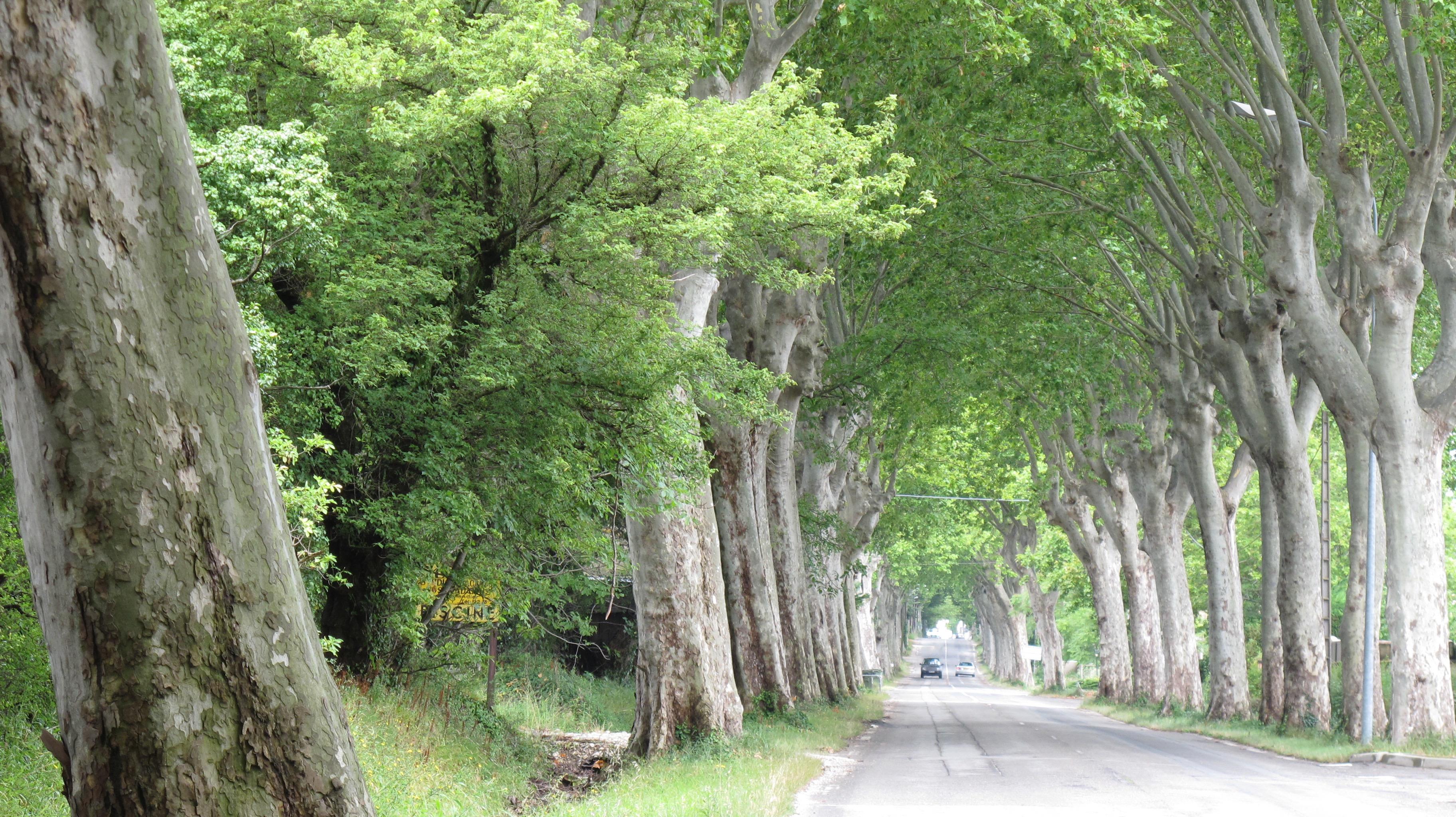 tunneloftrees