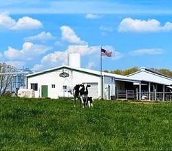 cow calf flag.jpg