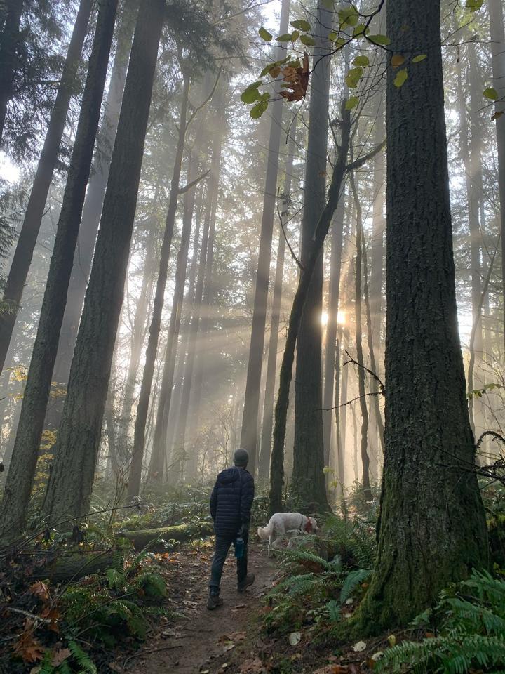 Forest Park in Portland, Oregon