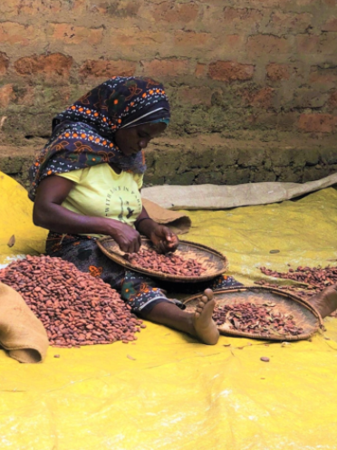 Careful selection of cacao beans by skilled craftsmen