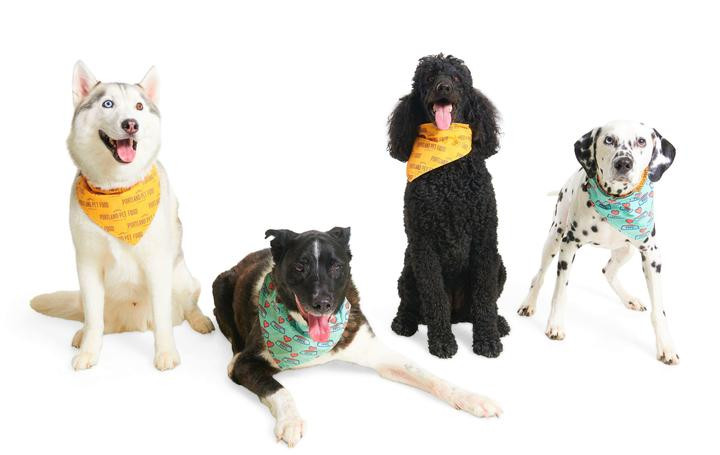 Four dogs with the bandanas from Portland Pet Food Company around their neck