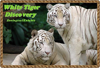 white tigers.jpeg