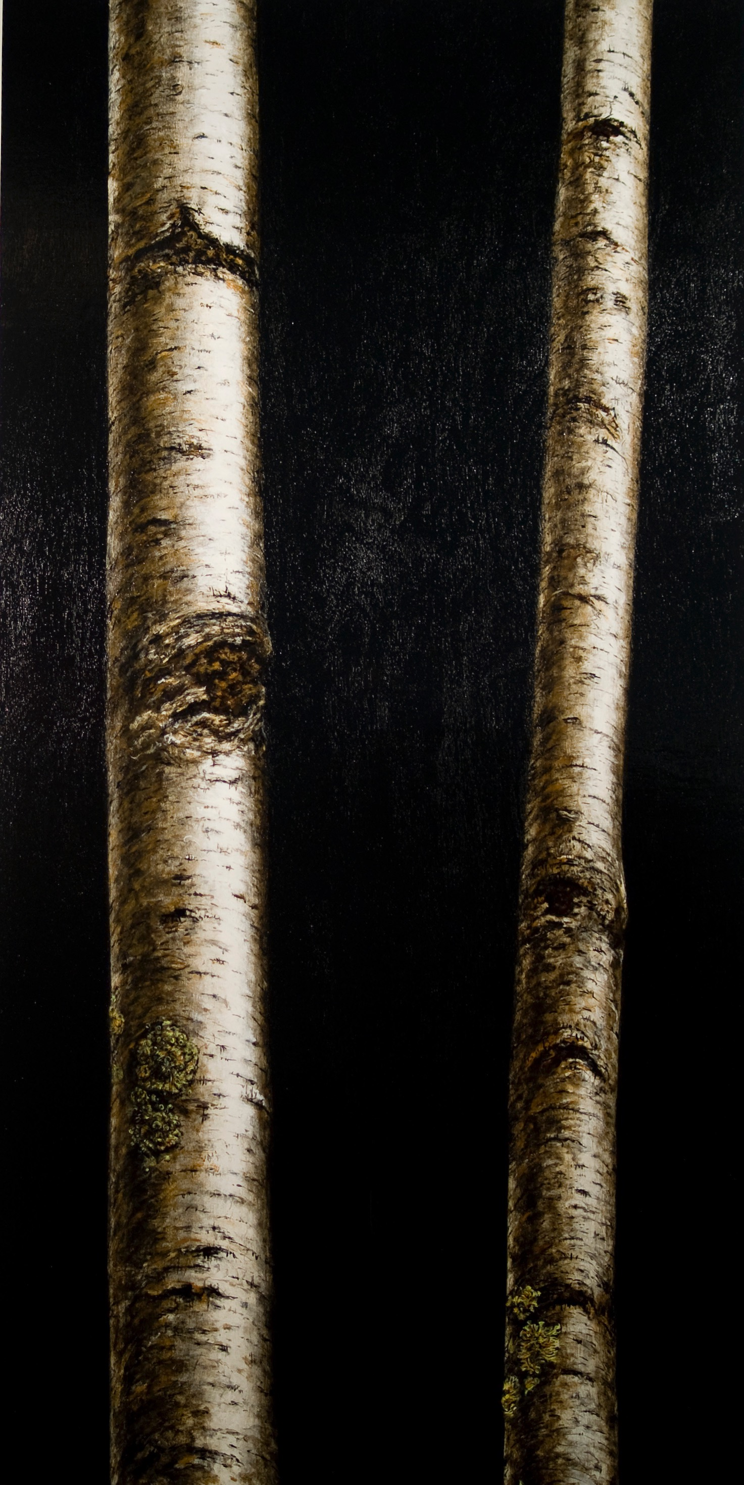 BIRCH XXVII WHITEFILED