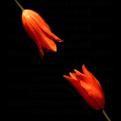 Floral VI