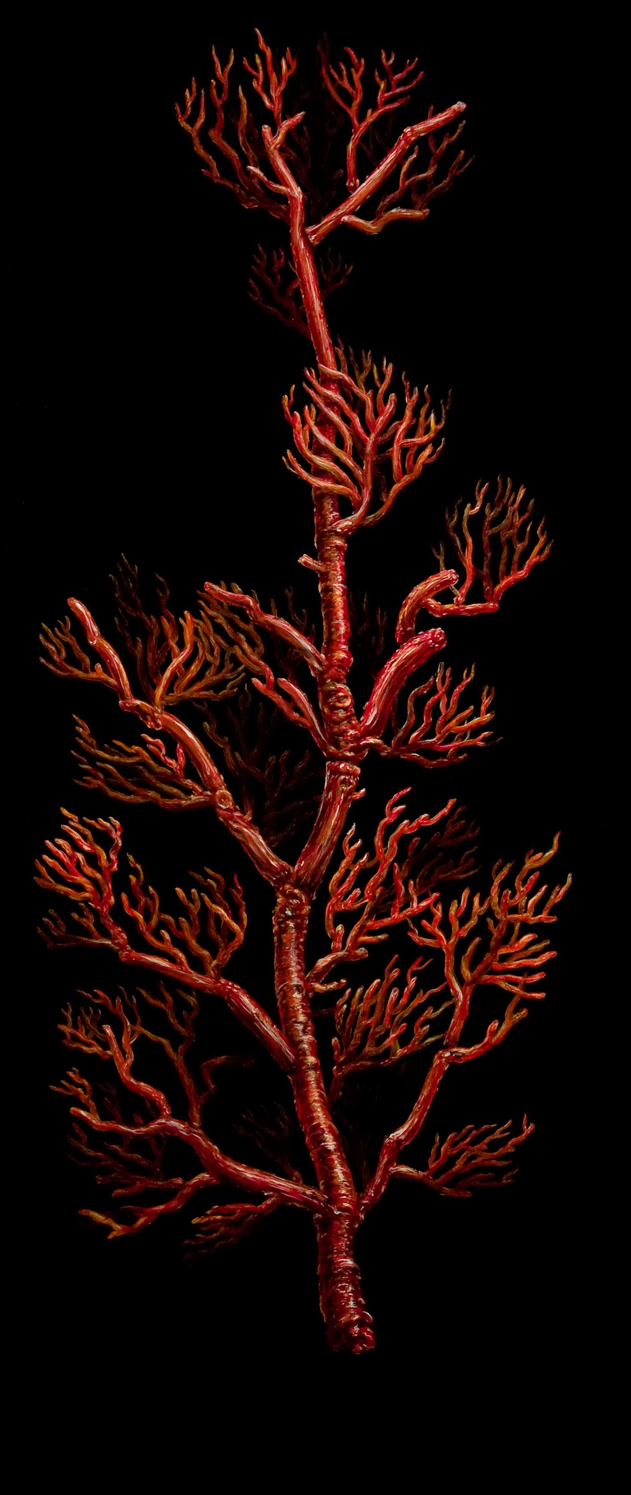 Red Coral oil on wood 24 x 60