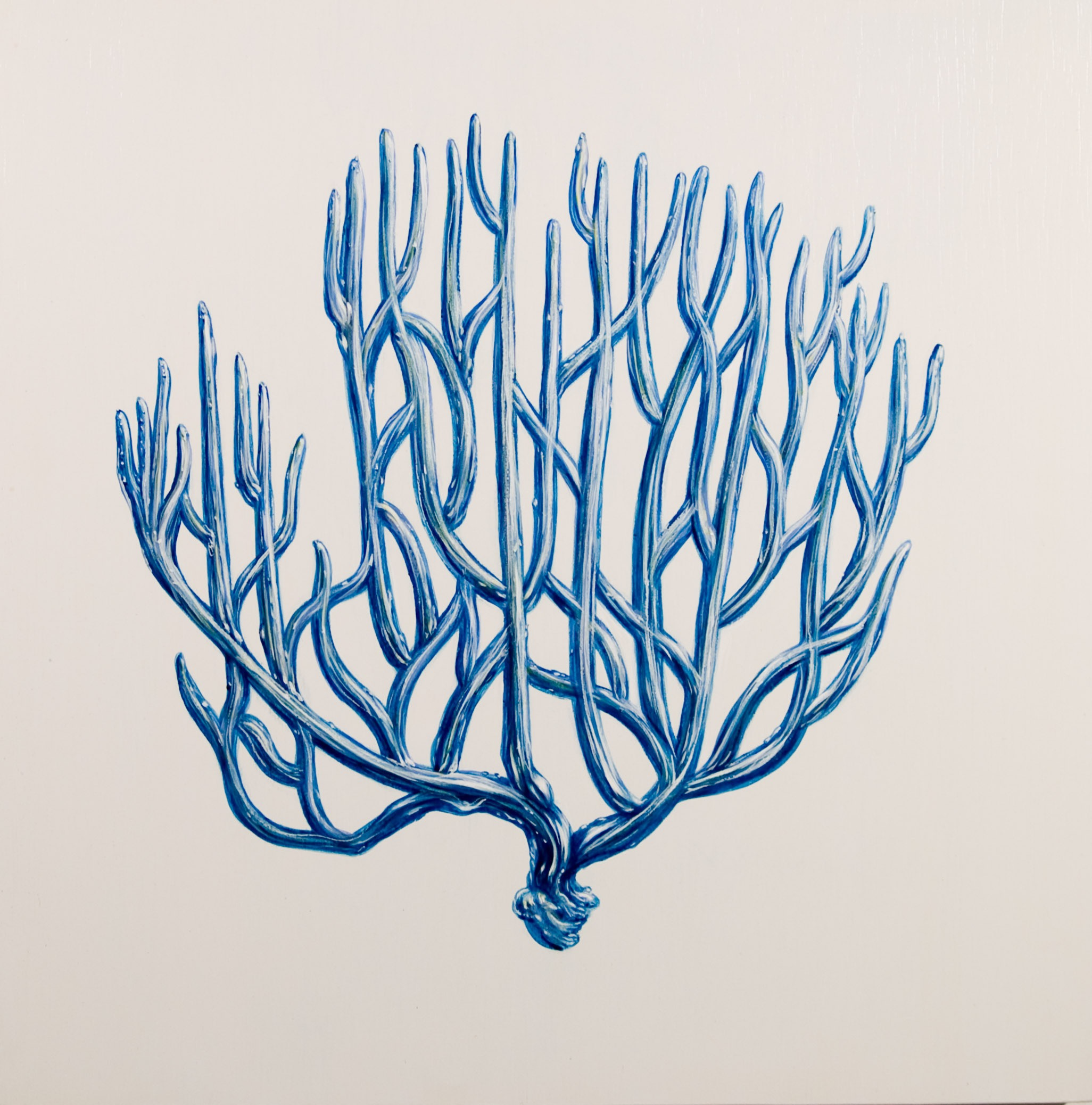 blue coral II oil on wood 24 x 24
