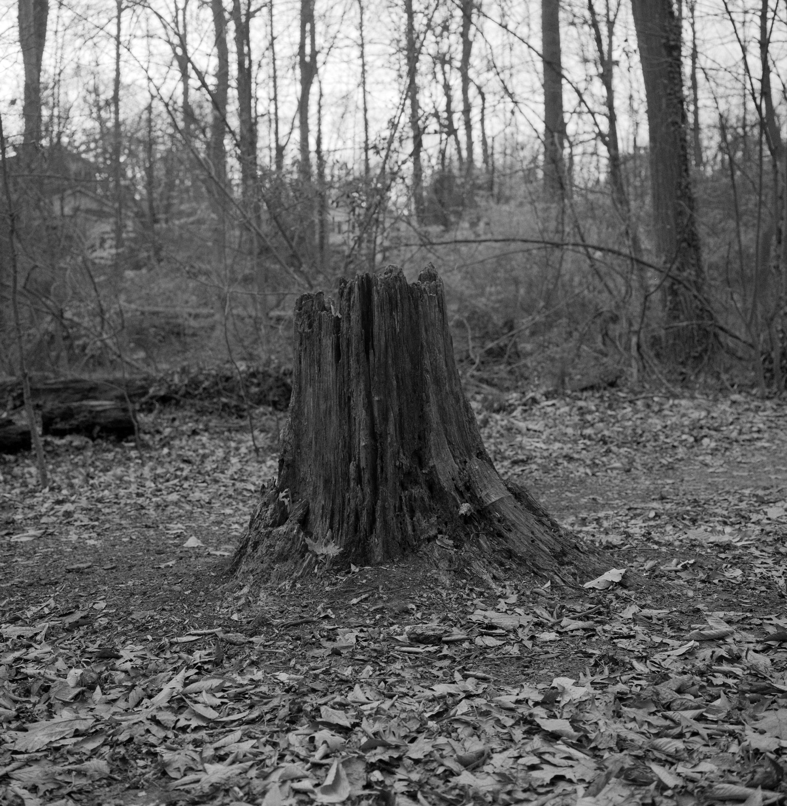 stump333