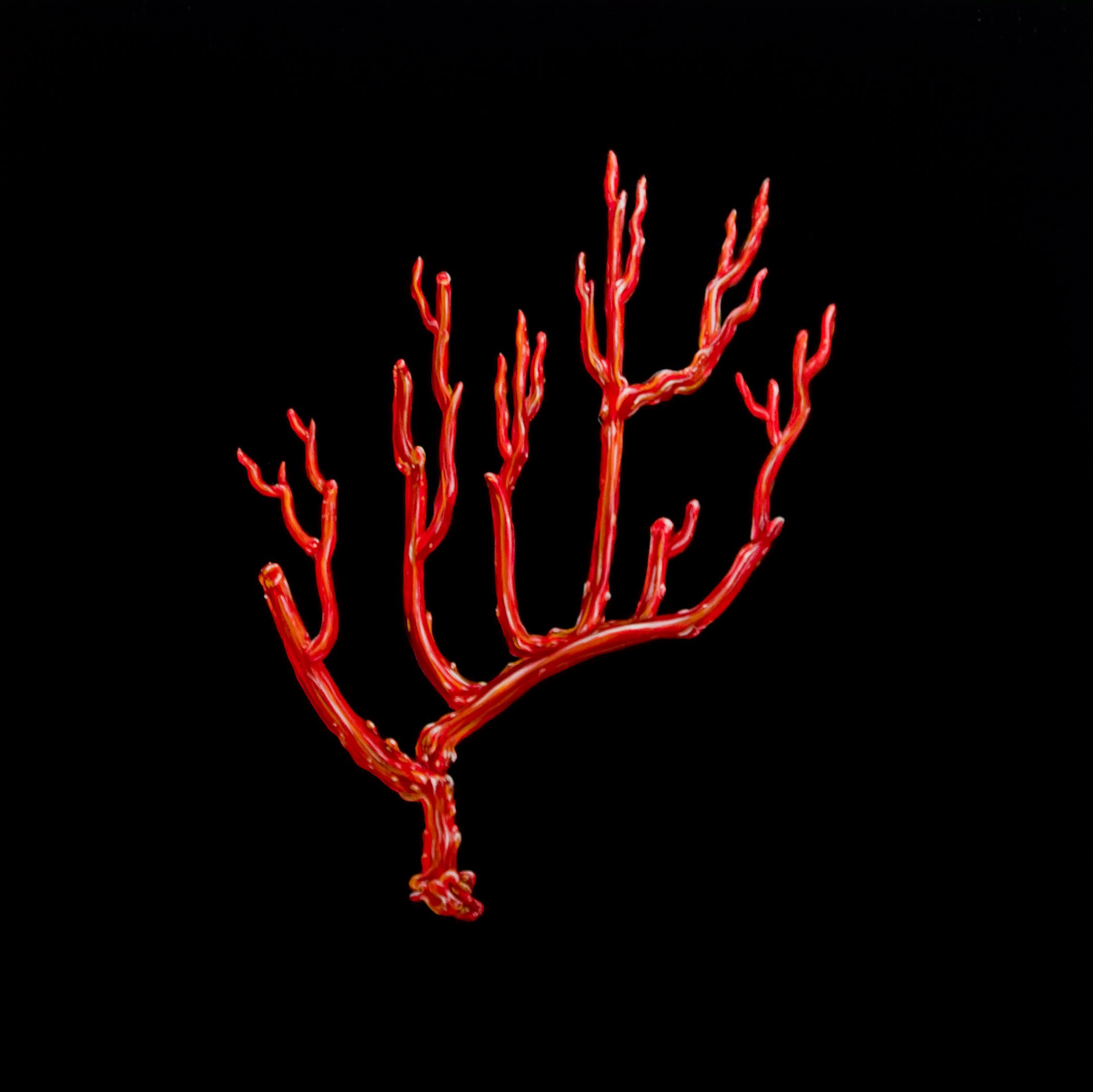 red coral I oil on wood 24 x 24