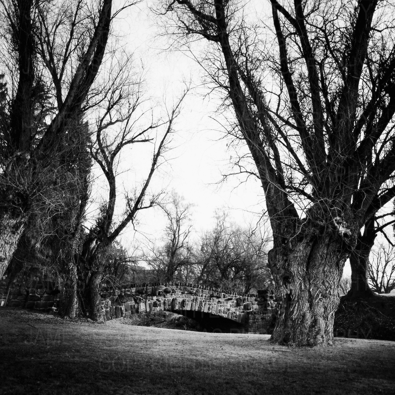 Landscape Study 20, Yakima