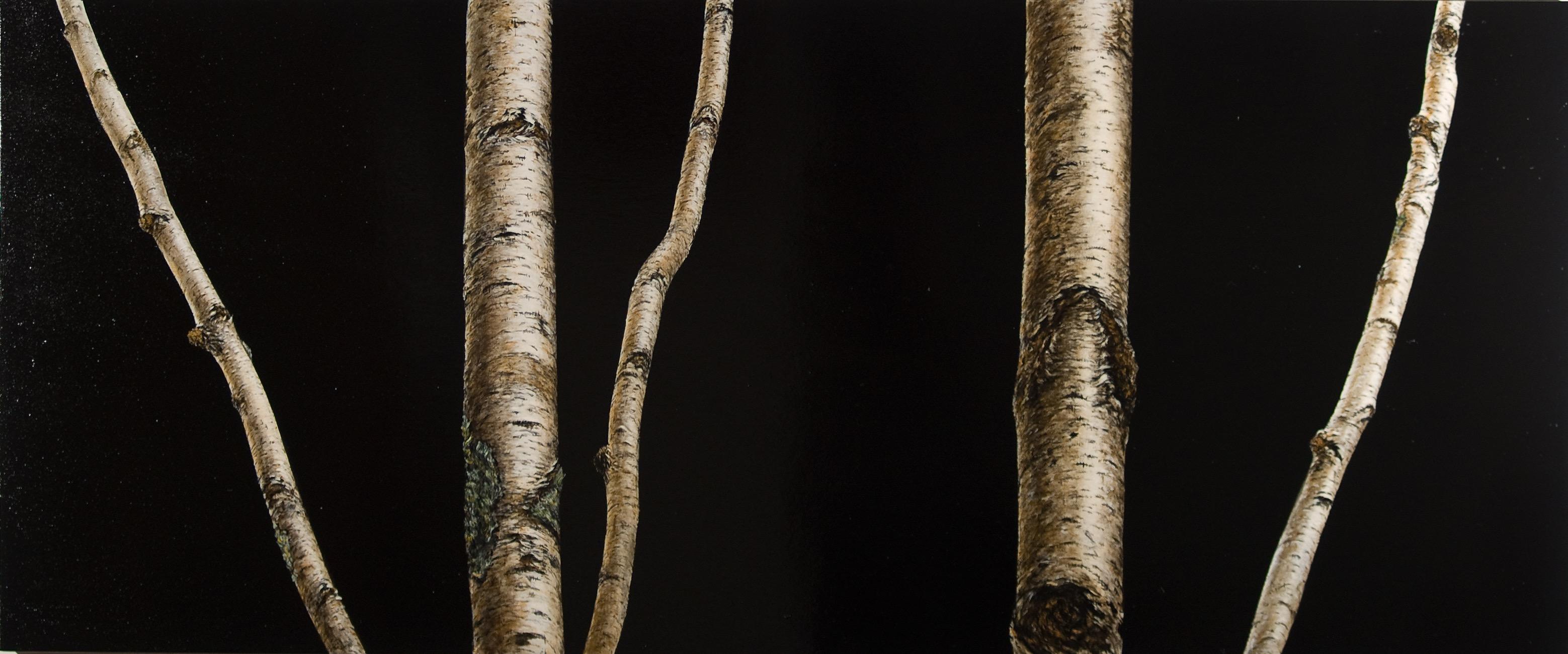 black birch 72 x 30