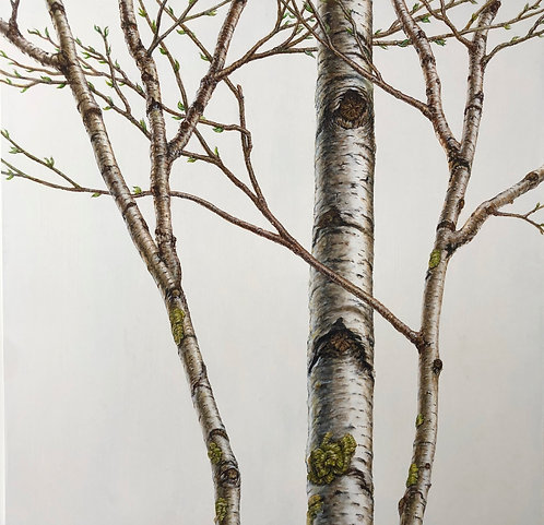 "White Birch, oil on panel, 48"" x 48"" x 1.5"""