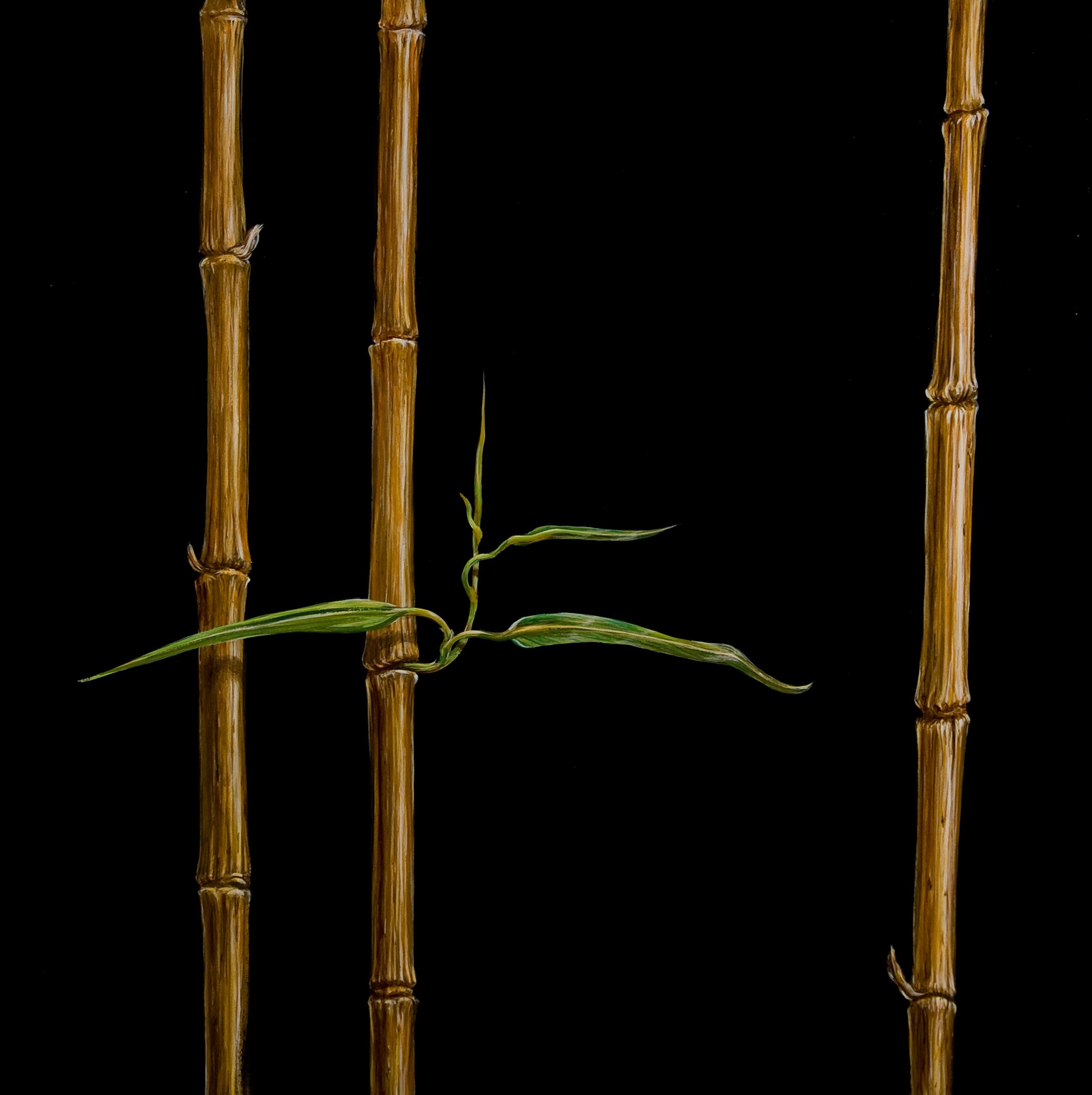 Bamboo black oil on panel 24 x 24
