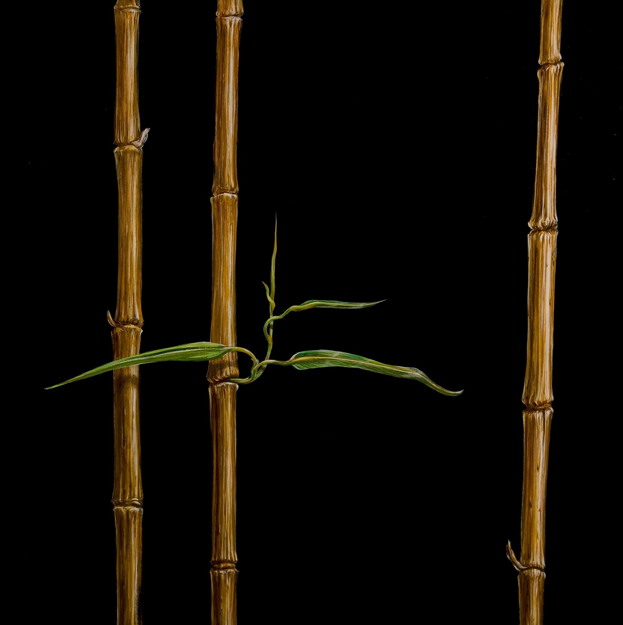 Bamboo black oil on panel 24 x 24