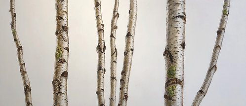white Birch commission