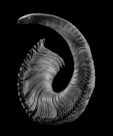 Ram Horn