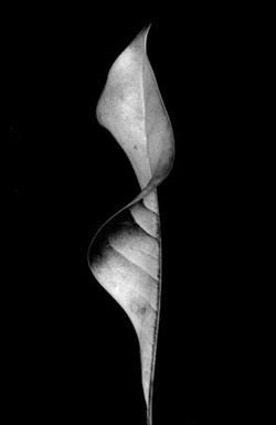 03_leaf_2 (1)