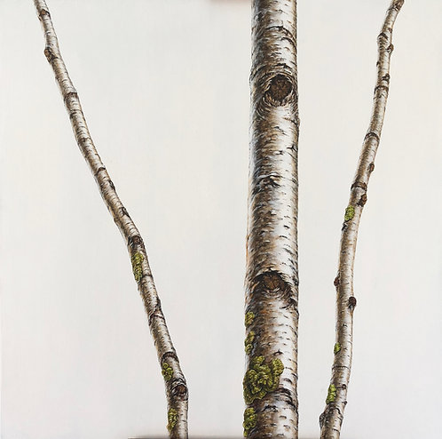 Three White Birch 2018