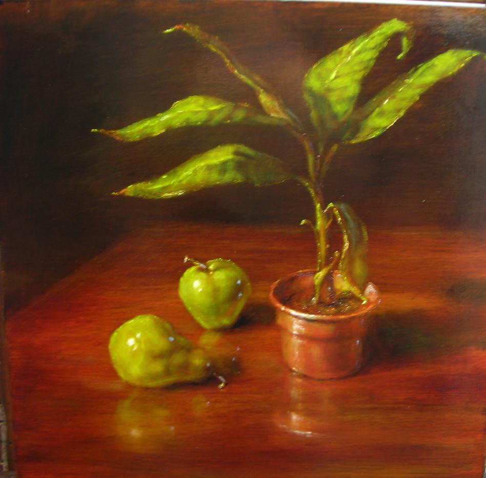 Banana Plant and Fruit
