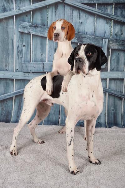 Domino & Maia
