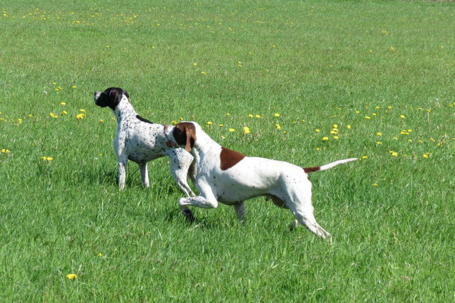Thyme & Mr Woof