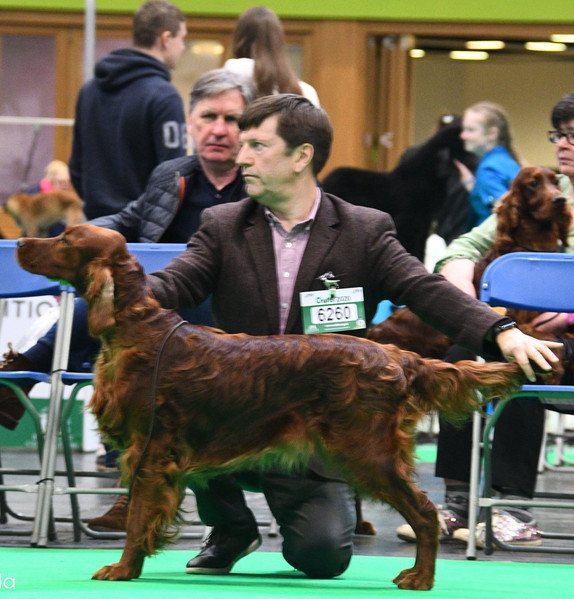 Tilly and Gordon at Crufts 2020