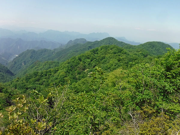 20210610_物語山からトヤ山10.jpg