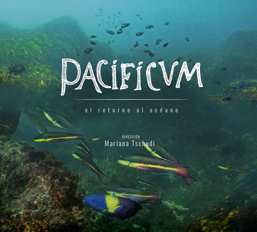 PACIFICUM - DOCUMENTARY