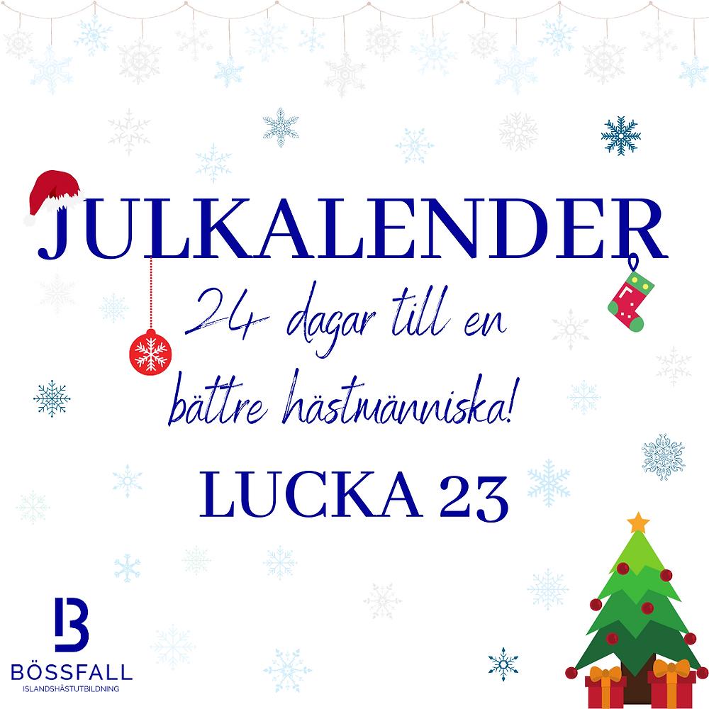 Julkalender 24 dagar till en bättre hästmänniska! Lucka 23