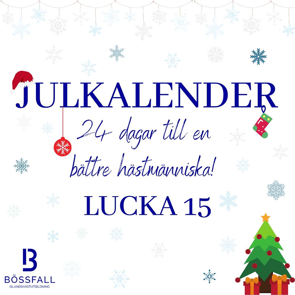 Julkalender 24 dagar till en bättre hästmänniska! Lucka 15