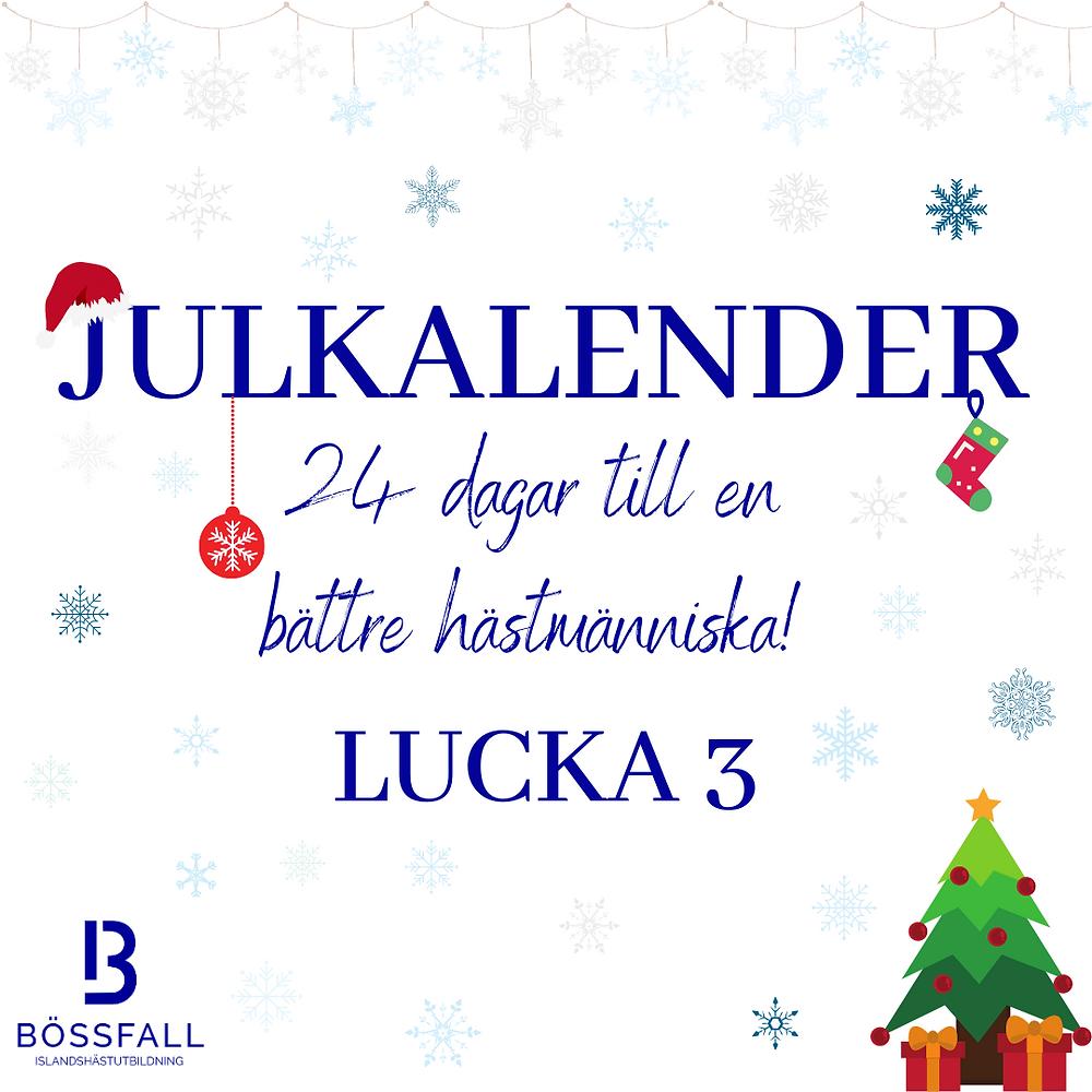 Julkalender 24 dagar till en bättre hästmänniska! Lucka 3