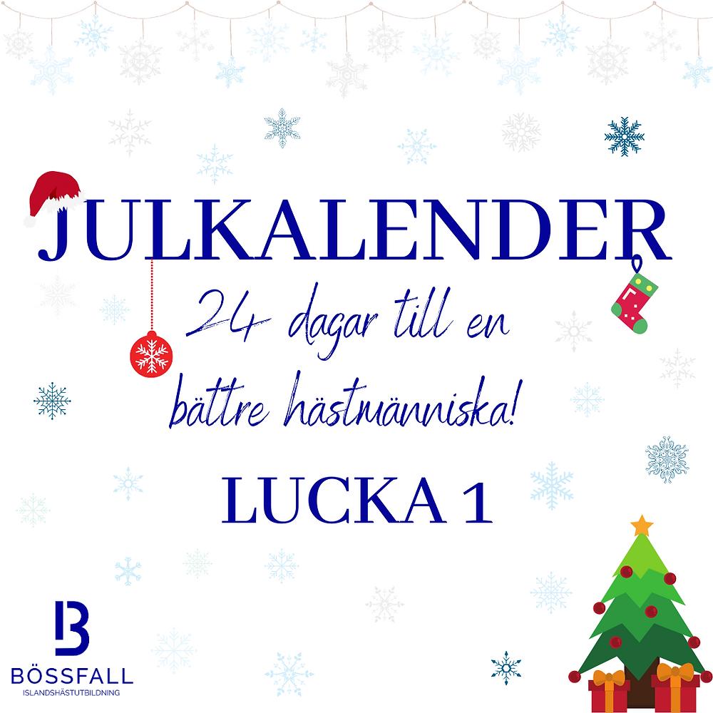 Julkalender 24 dagar till en bättre hästmänniska: Lucka 1