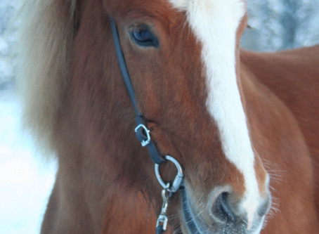 Att utvärdera en häst, del 1