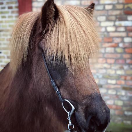 Lektion på lånad häst!