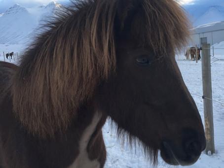 Att utvärdera en häst, del 2
