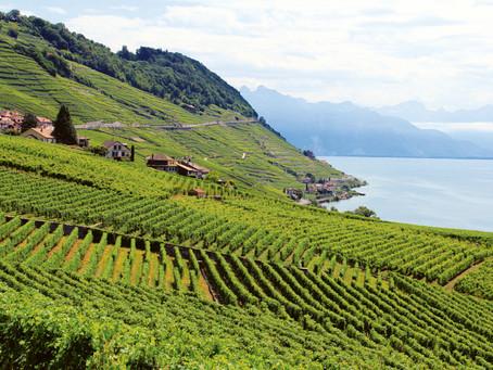 «Dézaley ist Teil der Schweizer Weinkultur»
