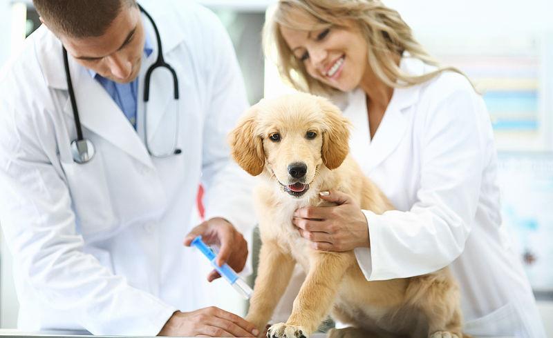 Prévoyance congé maternité pour vétérinaire Marseille