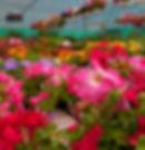 plantas-gran-canaria-2.jpg