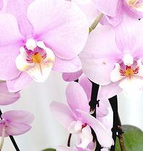 orquideas-gran-canaria.jpg