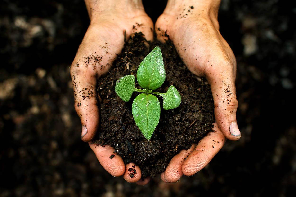 Zemlja, gnojila in semena